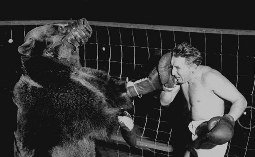Boxer Gus Waldorf against bear 1949